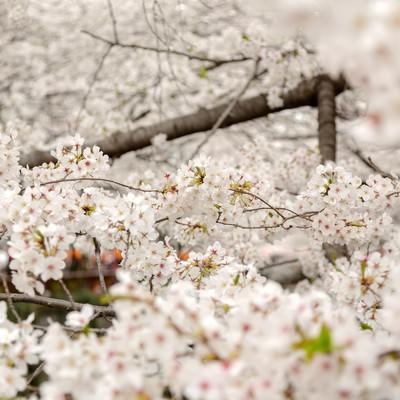 「春の始まり」の写真素材
