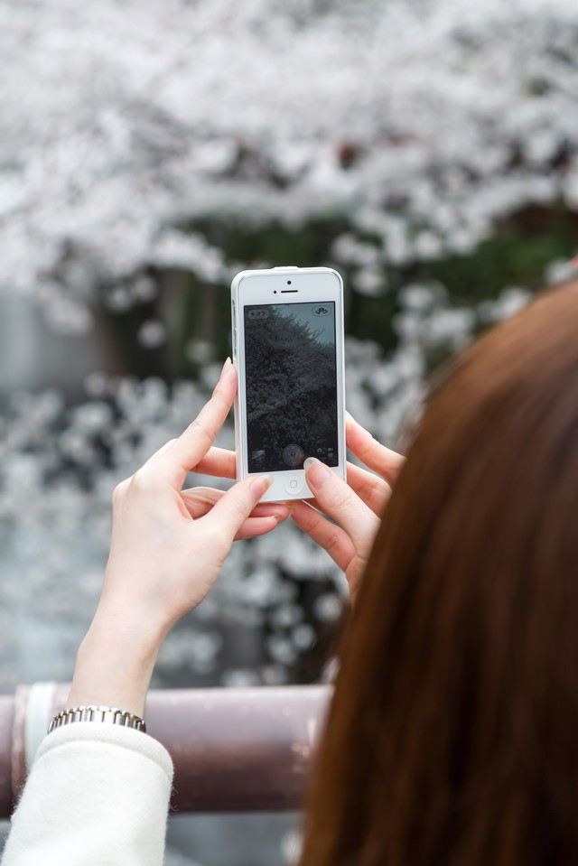 スマホのカメラで桜を撮る女性の写真