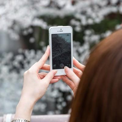 「スマホのカメラで桜を撮る女性」の写真素材