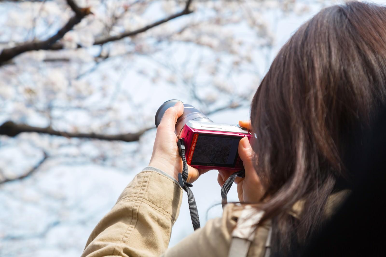 「桜をミラーレスカメラで撮影する女性」の写真