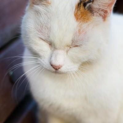 「ベンチでうとうとネコ」の写真素材
