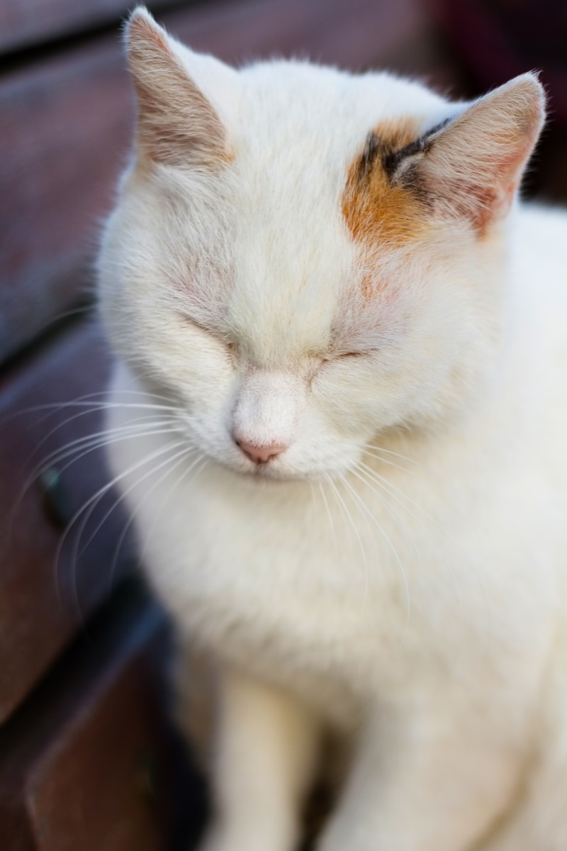 「ベンチでうとうとネコ | ぱくたそフリー素材」の写真