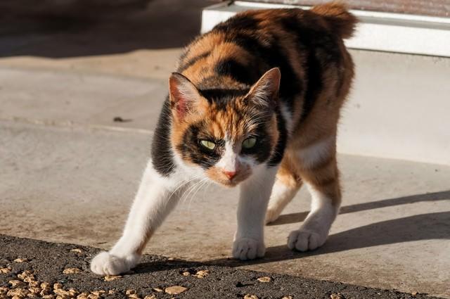 警戒する猫ちゃんの写真