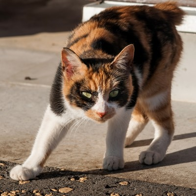 「警戒する猫ちゃん」の写真素材