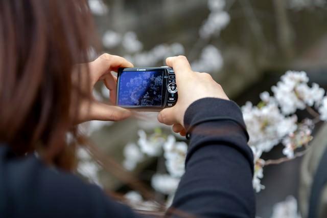 コンデジで桜を撮る女性の写真