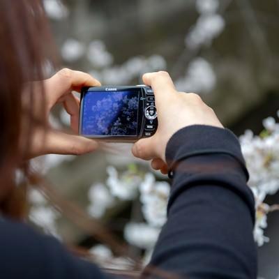 「コンデジで桜を撮る女性」の写真素材