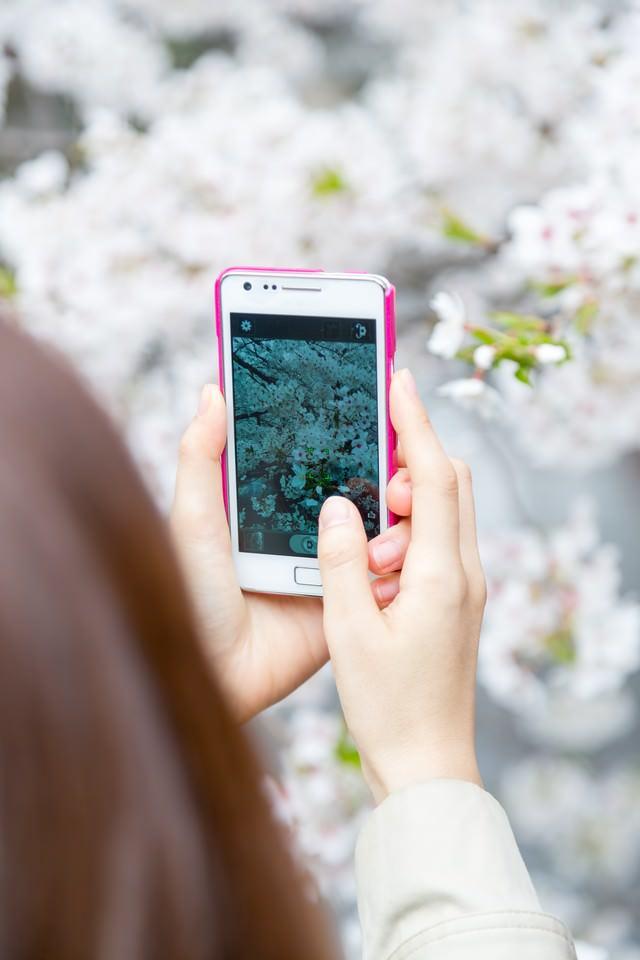 スマホで桜を撮る女性の写真