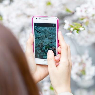 「スマホで桜を撮る女性」の写真素材