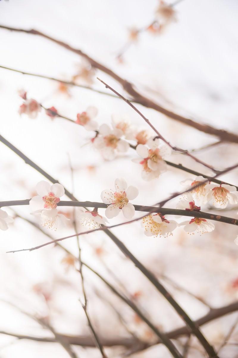 「梅の花と春梅の花と春」のフリー写真素材を拡大
