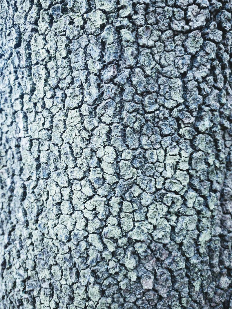 「樹皮に細かくヒビが入っている木(テクスチャ)」の写真