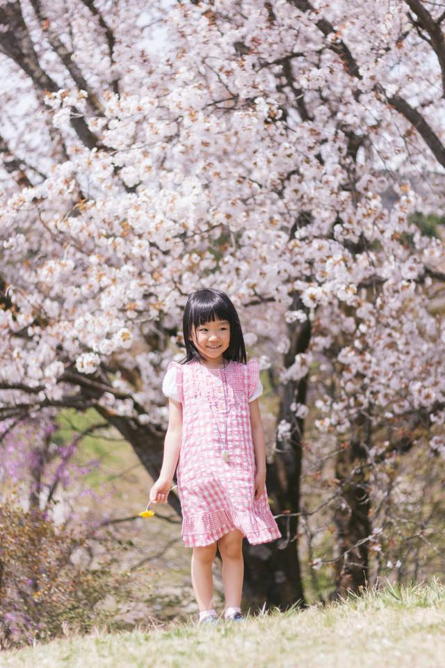 桜の木と女の子の写真