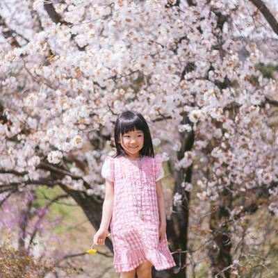 「桜の木と女の子」の写真素材