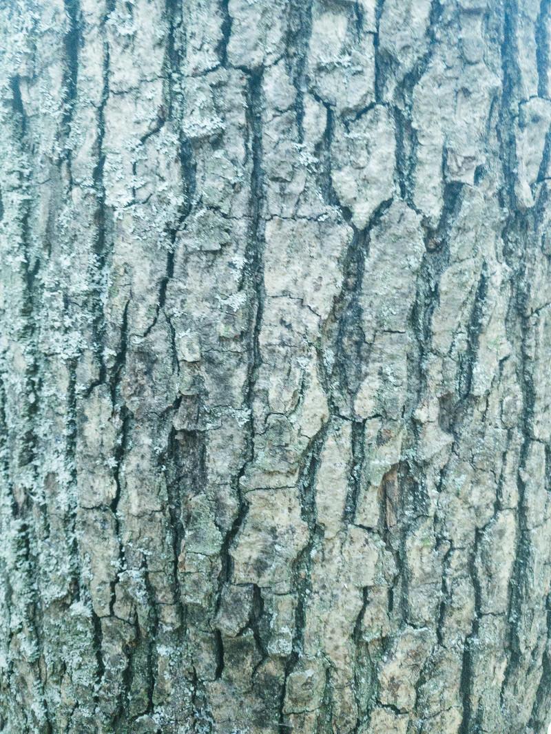 「溝だらけの樹皮(テクスチャ)」の写真