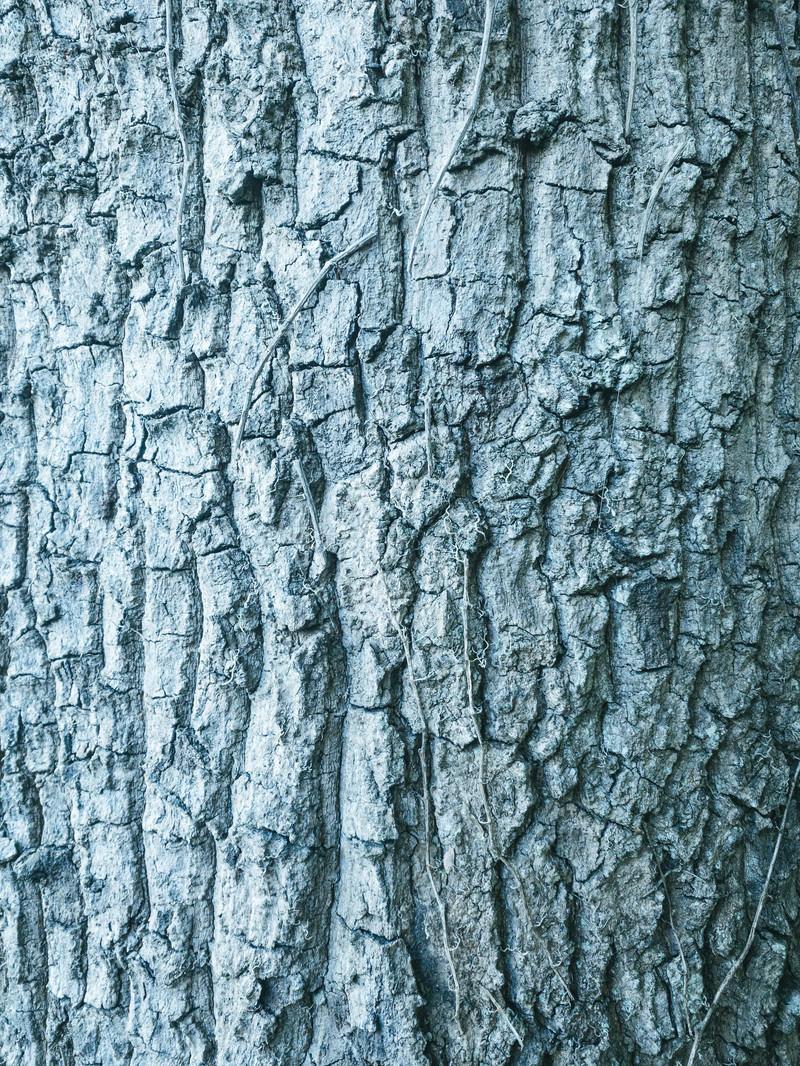「枯れたツルと樹皮(テクスチャ)」の写真