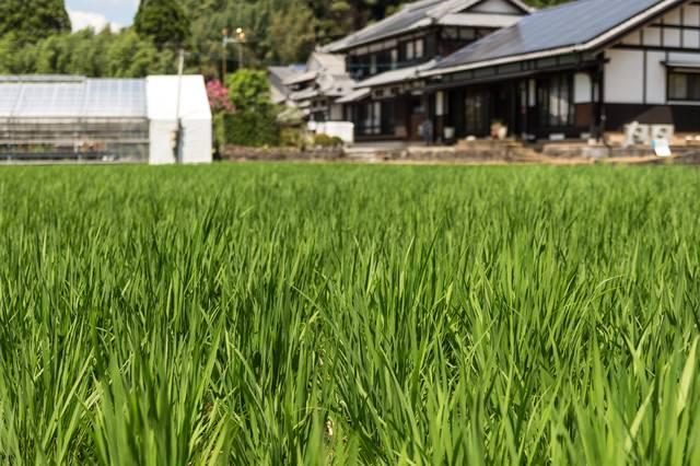 田んぼと民家の写真