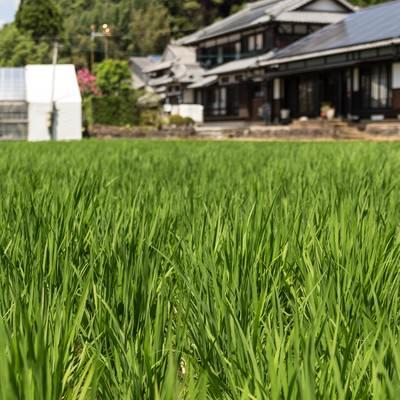 「田んぼと民家」の写真素材