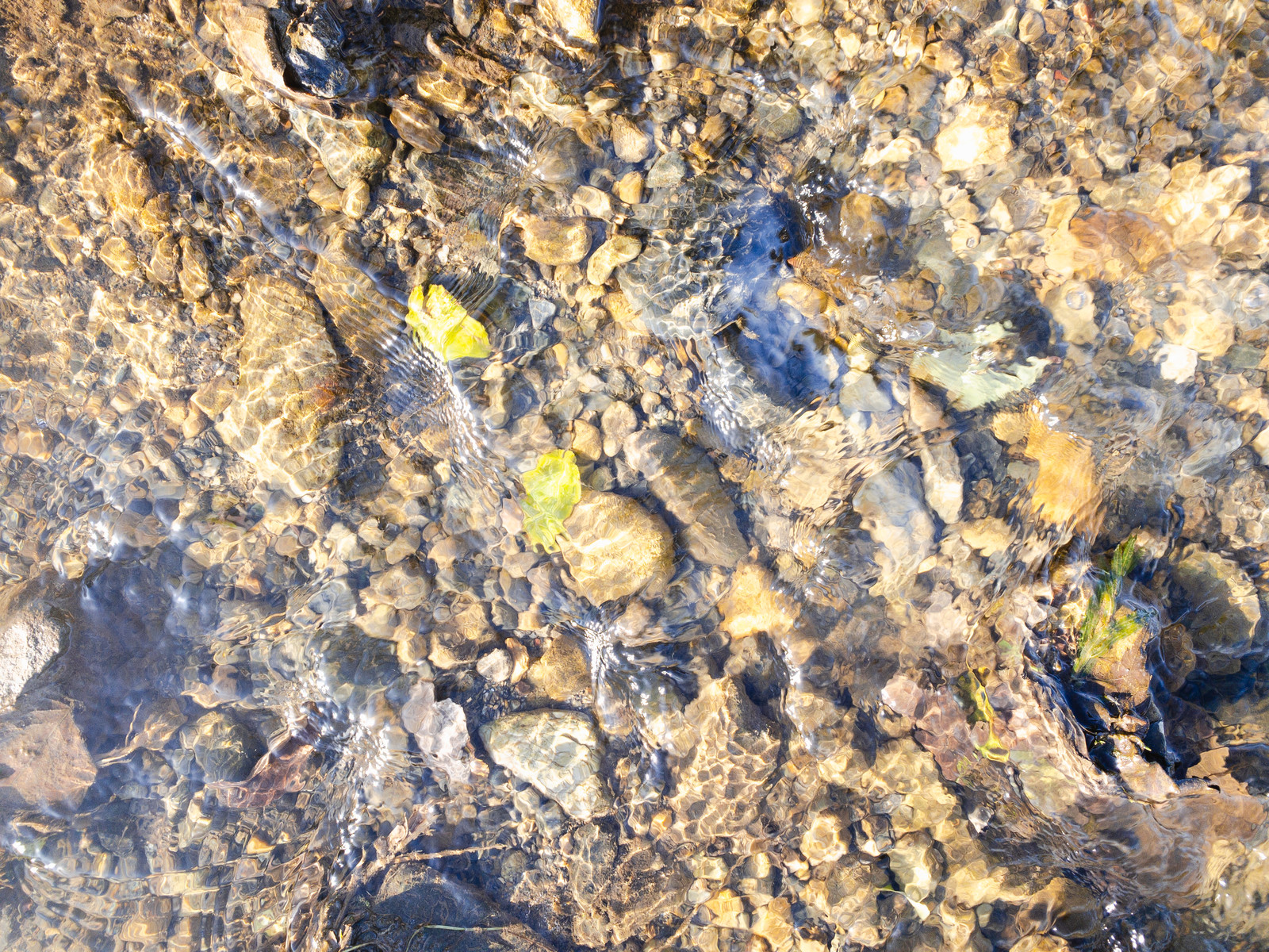 「水底に残る葉っぱと水の流れ(テクスチャ)」の写真
