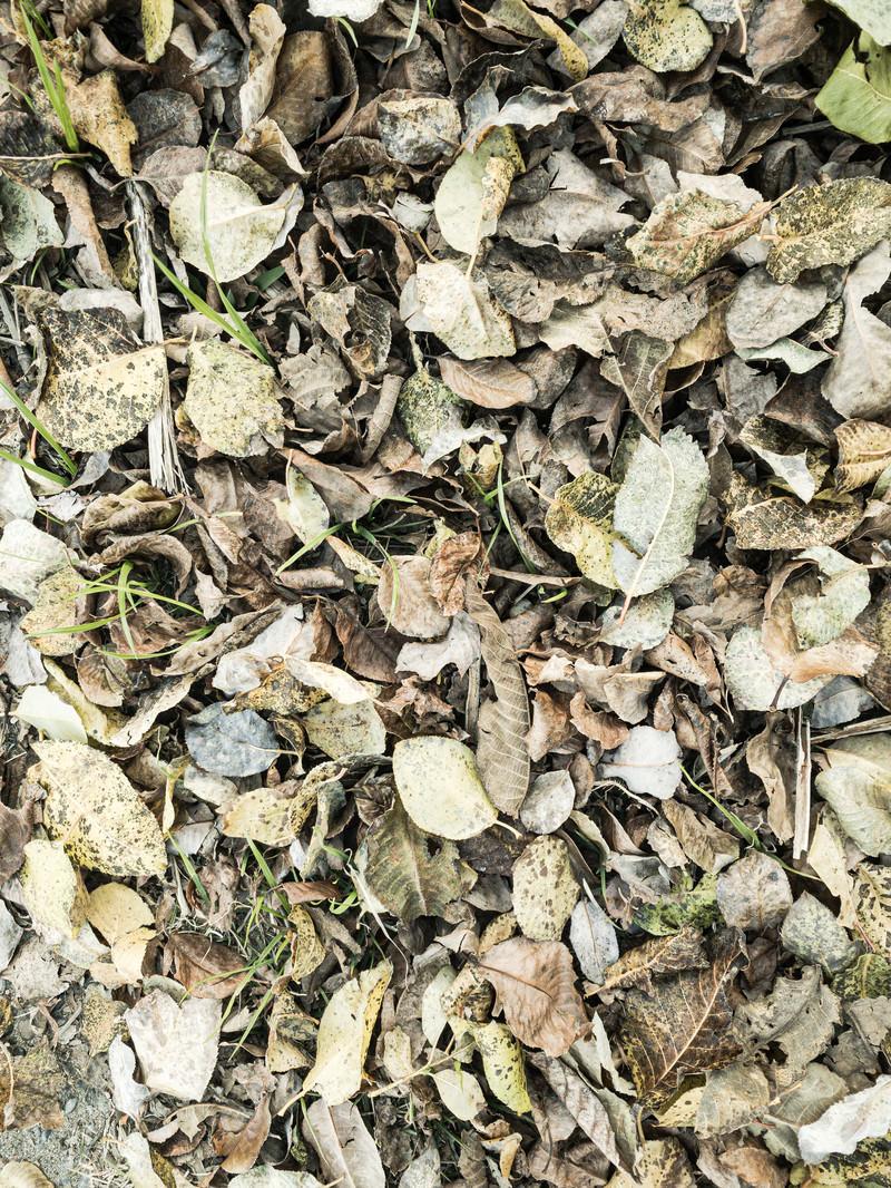 「地面に落ちた大量の枯れ葉(テクスチャ)」の写真