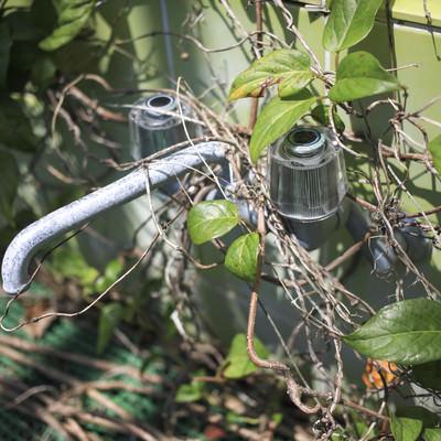 植物が生い茂る中の水道の写真