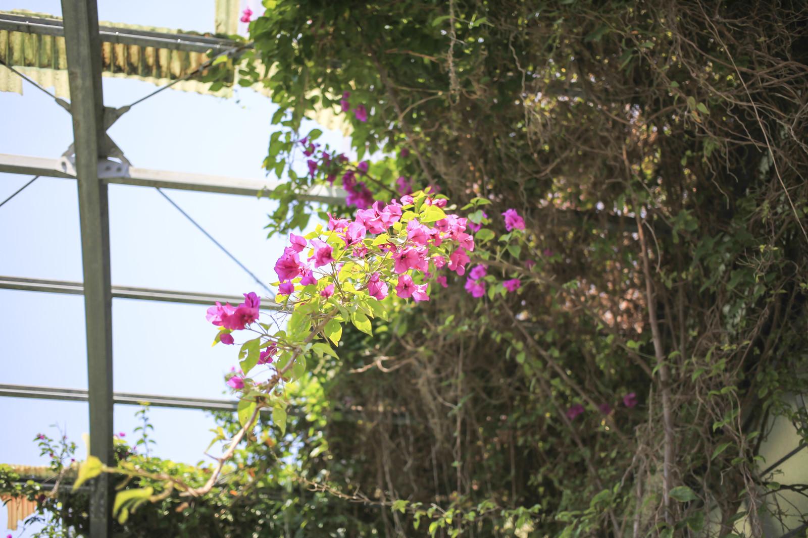 「廃墟で咲いていた花」の写真