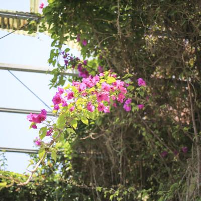 廃墟で咲いていた花の写真