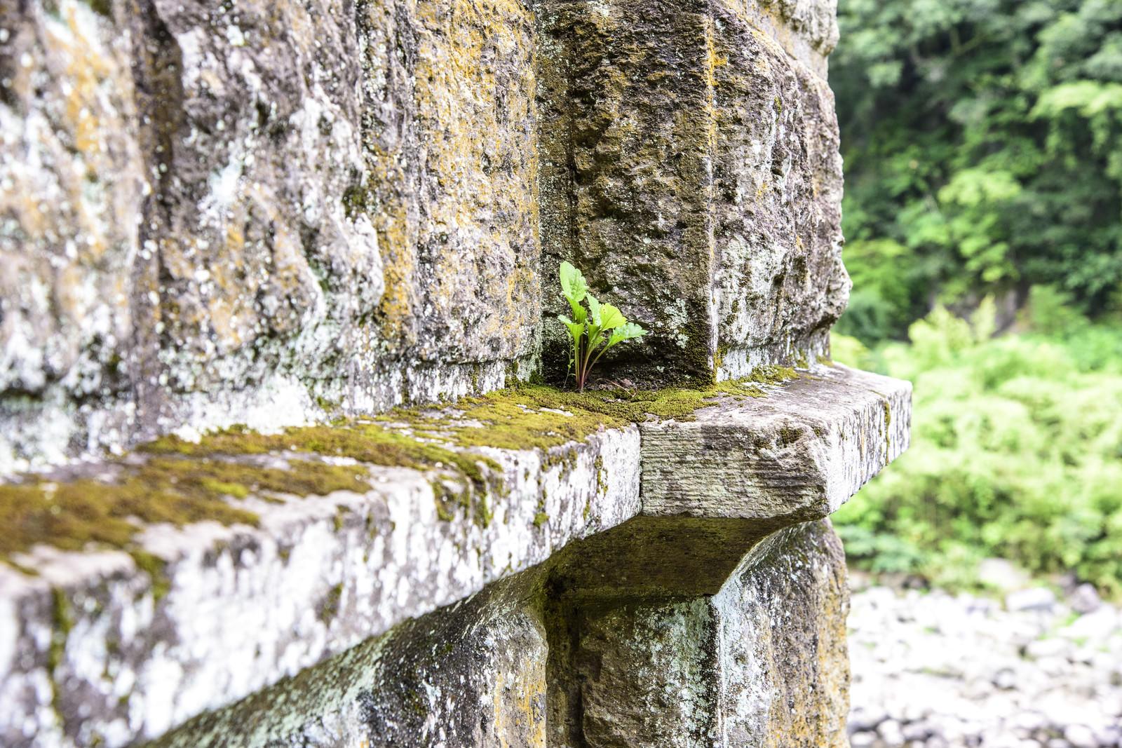 「苔がついた廃墟の壁」の写真