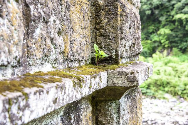 苔がついた廃墟の壁の写真