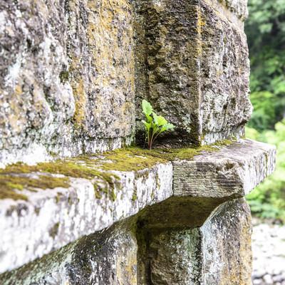 「苔がついた廃墟の壁」の写真素材