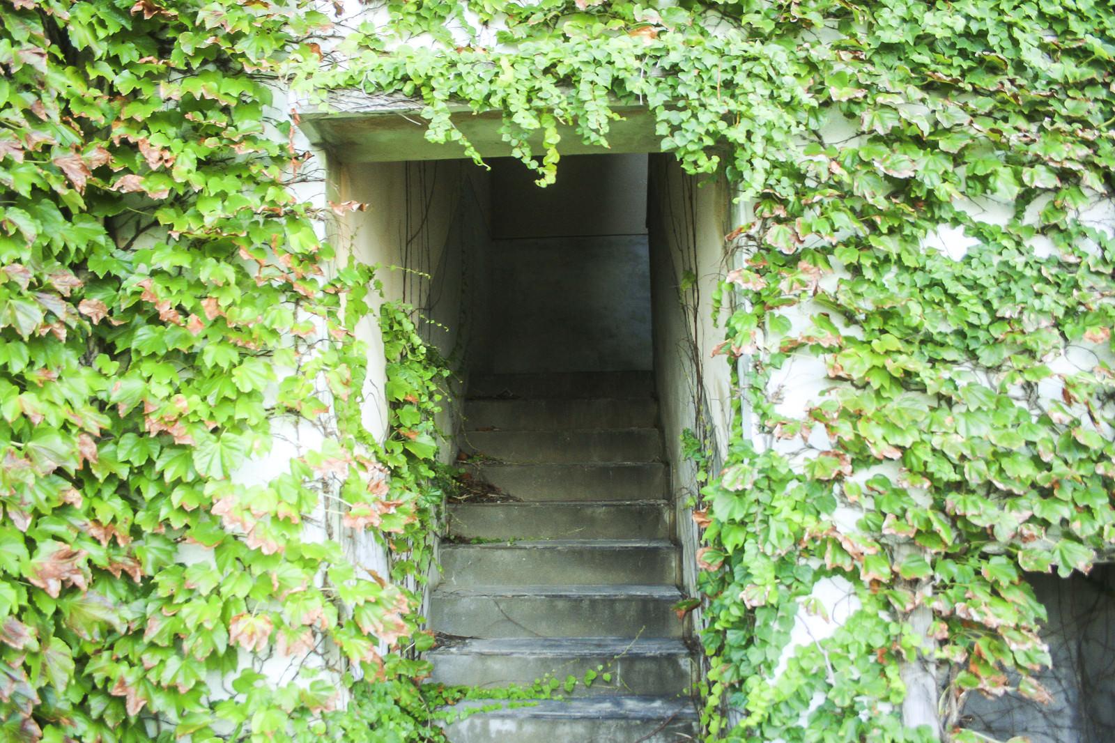 「蔦で覆われた階段入口」の写真