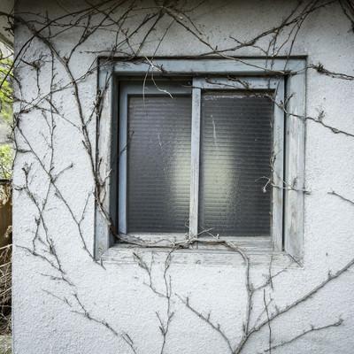 「蔦と不気味な窓、ホラーっぽい建物」の写真素材