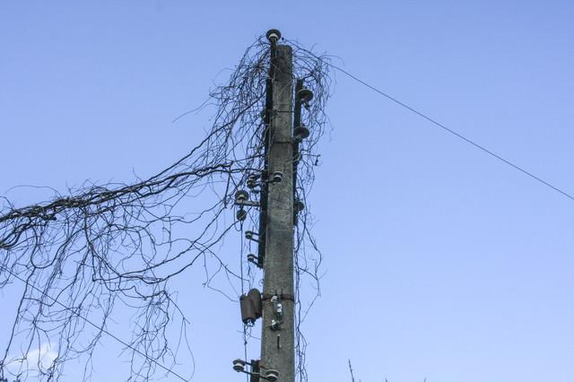 蔦が絡まった使われていない電柱の写真