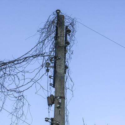 「蔦が絡まった使われていない電柱」の写真素材