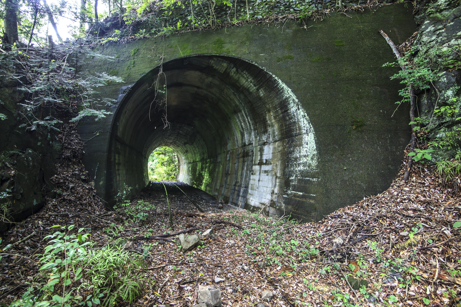 「山奥の廃線とトンネル」の写真
