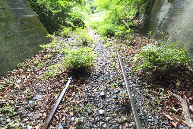 自然の一部になりつつある廃線のレールの写真