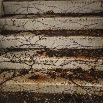 蔦で覆われはじめた階段の写真