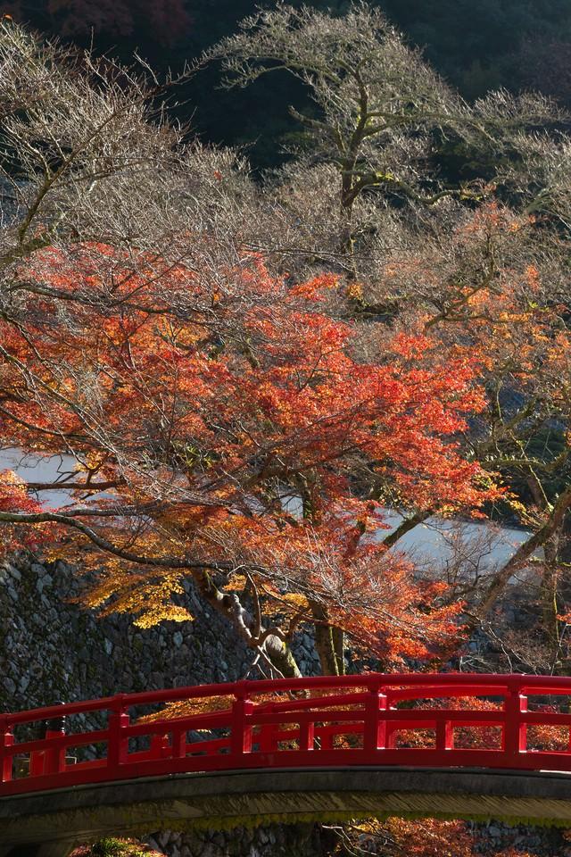 赤い橋と黄葉の写真