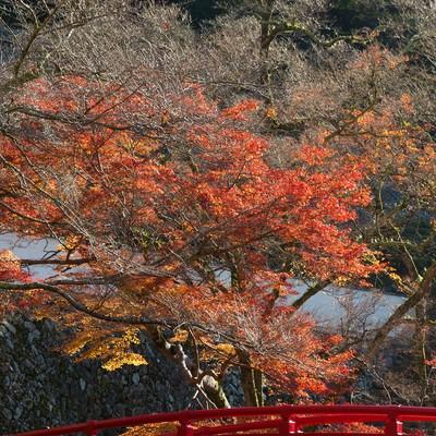 「赤い橋と紅葉」の写真素材