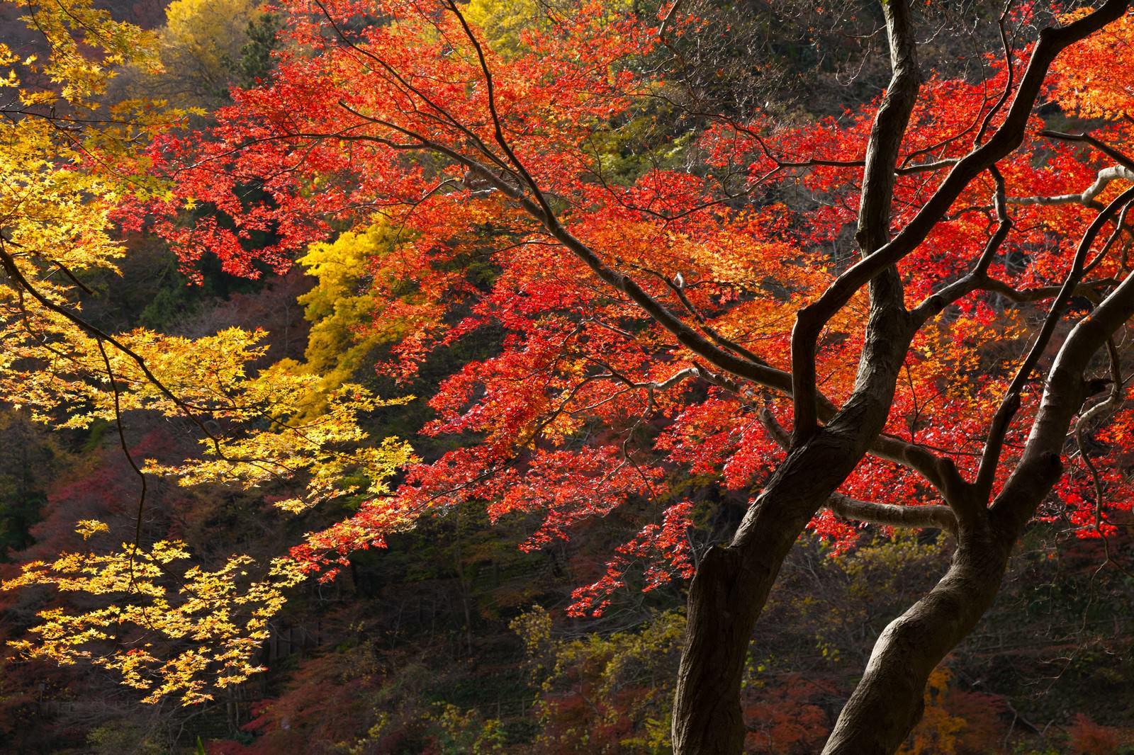 「色づいた木」の写真