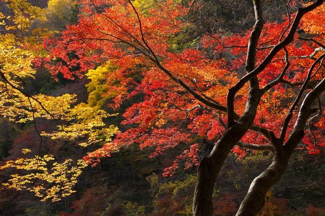 色づいた木の写真