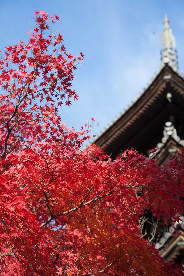 紅葉と五重塔の写真