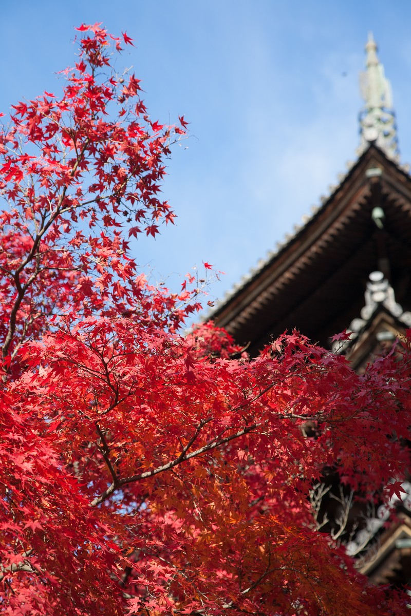 「紅葉と五重塔紅葉と五重塔」のフリー写真素材を拡大