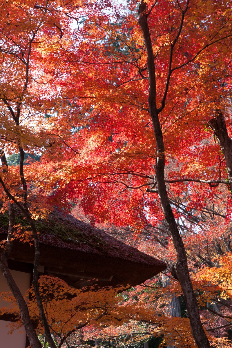 「かやぶき屋根と紅葉」の写真