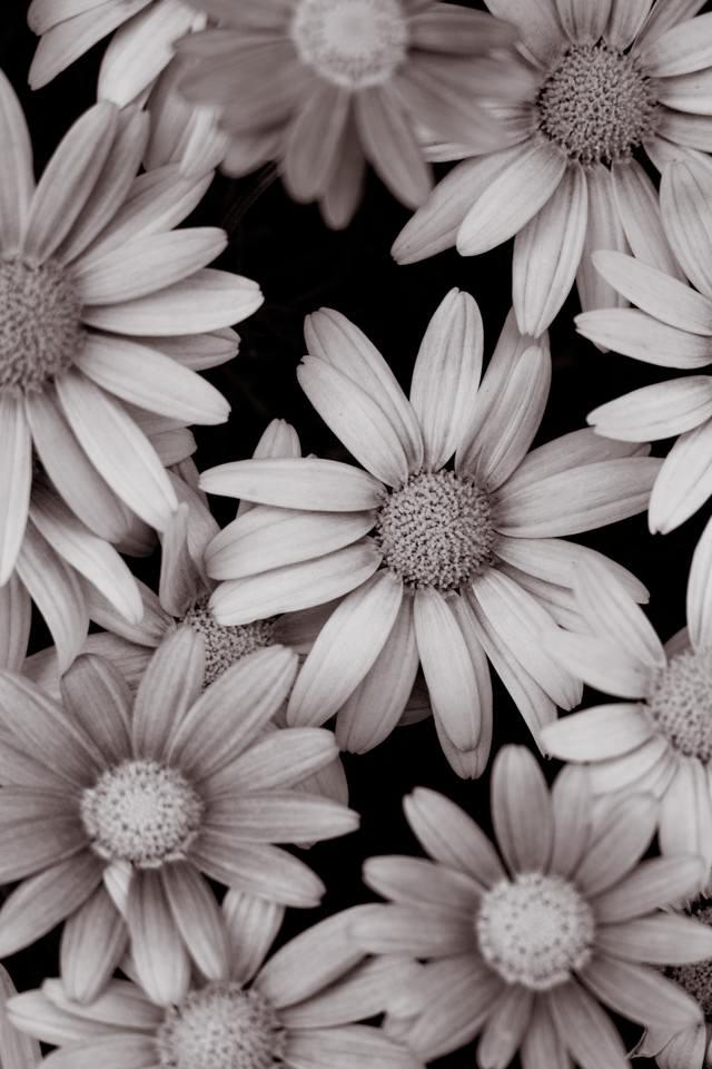 花のテクスチャの写真