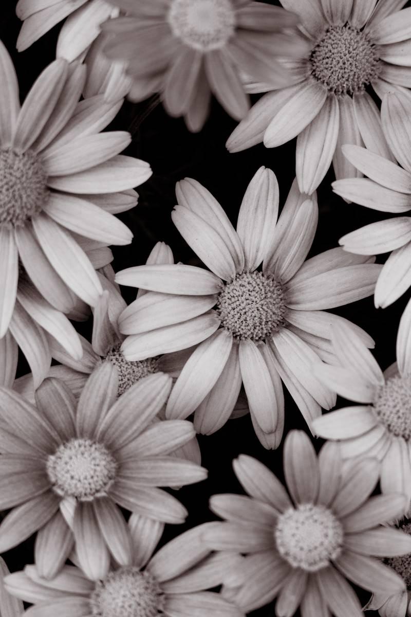 「花のテクスチャ」の写真