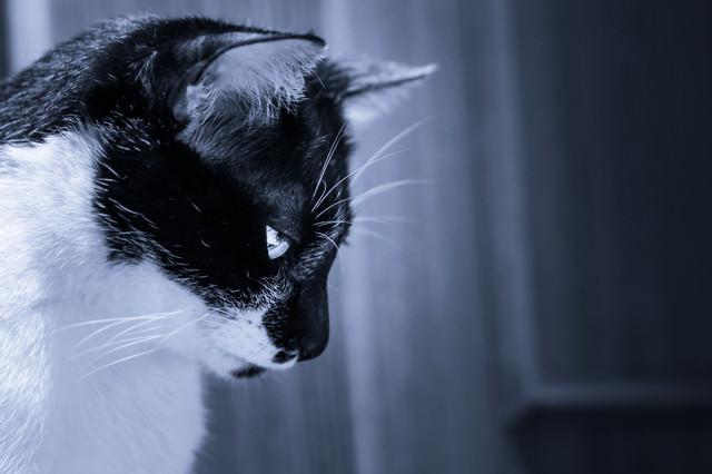 残念にうつむくネコの写真