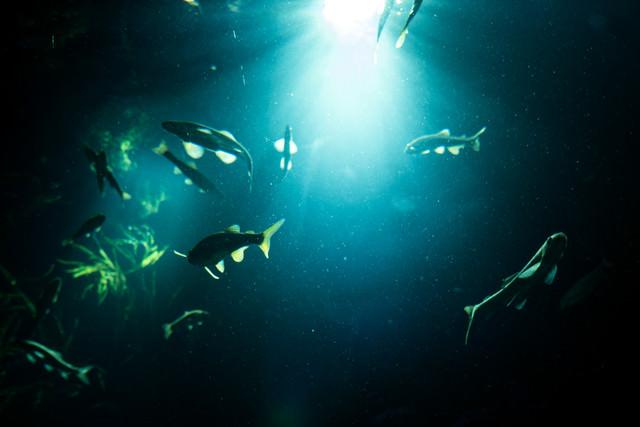 水中に射し込む光と魚の影の写真