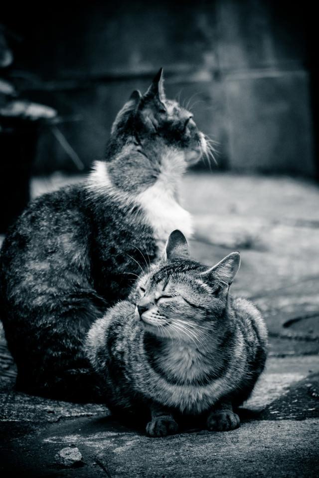 路地裏で日向ぼっこする2匹の猫