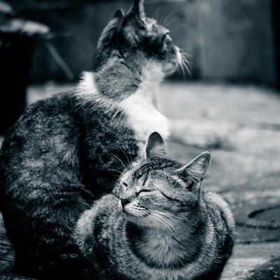 路地裏で日向ぼっこする2匹の猫の写真