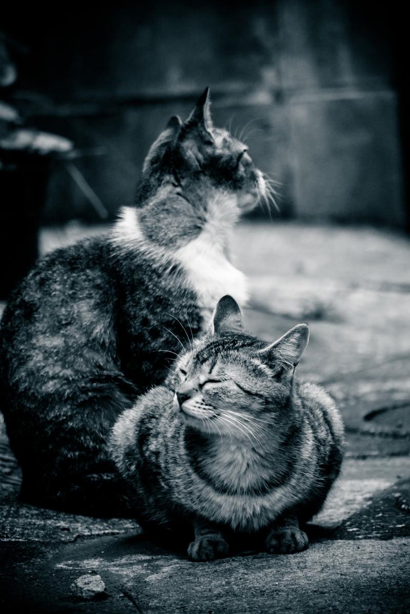 「路地裏で日向ぼっこする2匹の猫」の写真