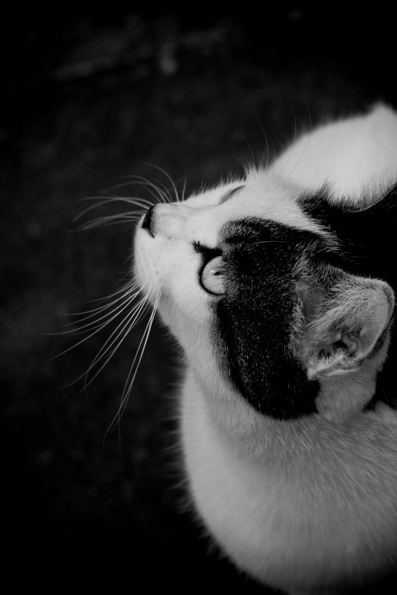 「見上げる猫 | 写真の無料素材・フリー素材 - ぱくたそ」の写真